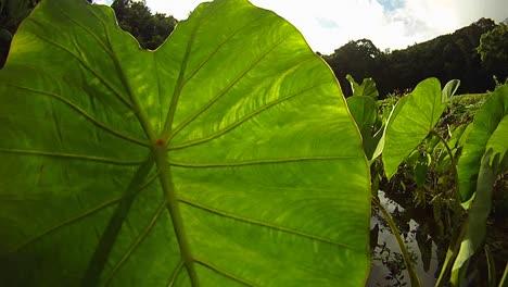 Pov-Shot-Recorriendo-Plantas-Y-Hojas-Verdes-