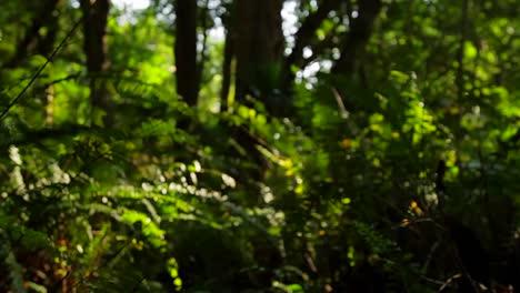 POV-shot-moving-through-dense-jungle-or-forest