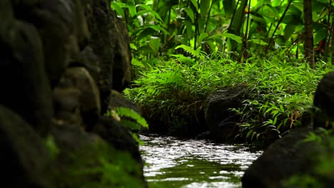 A-stream-through-a-tropical-forest
