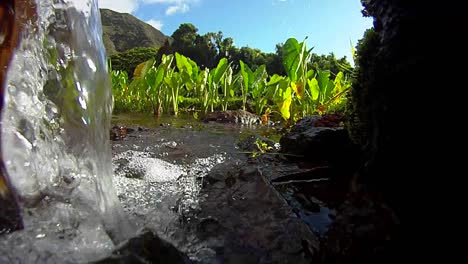 Pure-fresh-clean-water-pours-down-a-stream-and-into-the-fields