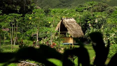 Una-Pequeña-Cabaña-Nativa-En-La-Jungla-En-Una-Isla-Tropical
