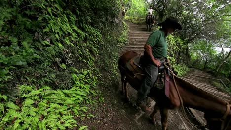 People-ride-horses-along-a-narrow-trail-in-Hawaii-2