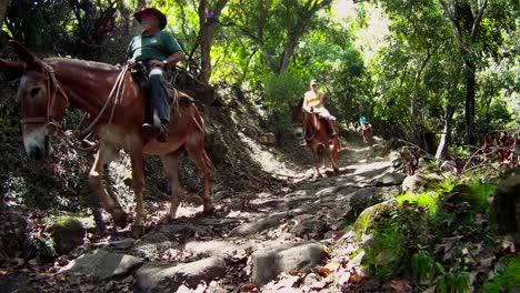 People-ride-horses-through-dense-jungle-in-Hawaii