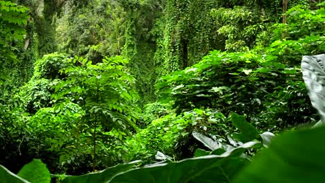 Beautiful-moving-shot-through-dense-green-jungle-paradise
