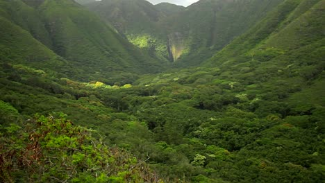 Slow-zoom-into-dense-jungle-paradise-in-Hawaii