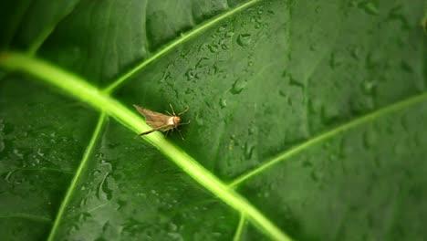 A-small-moth-on-a-green-leaf