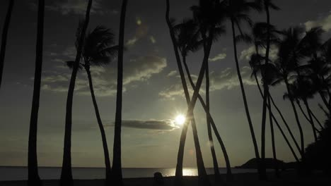 The-sun-or-moon-sets-behind-palm-trees-in-time-lapse
