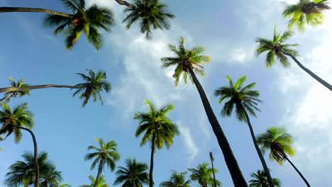 A-low-angle-view-of-palm-trees-and-clouds