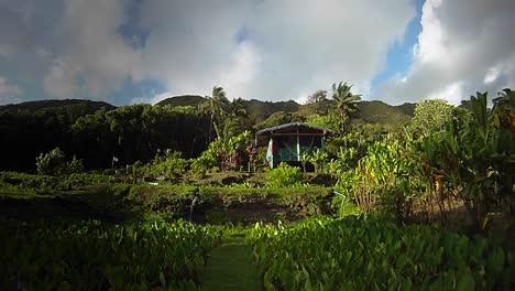 Eine-Kleine-Hütte-In-Einer-Tropischen-Regenwaldregion