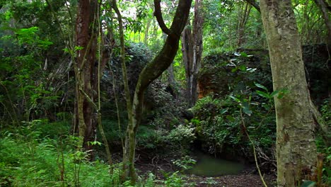 Pan-across-dense-jungle-rainforest