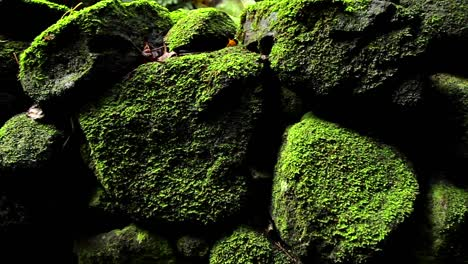 POV-moving-past-rocks-and-moss-and-lichen-in-a-rainforest