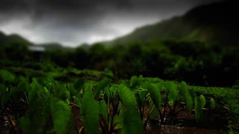 Un-Lapso-De-Tiempo-Estilizado-De-Campos-Verdes-Con-Nubes-Sobre-Su-Cabeza