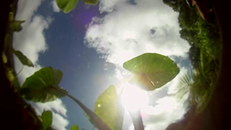 POV-from-the-bottom-of-a-pond-pool-or-stream-with-leaves-floating-on-top-and-the-sky