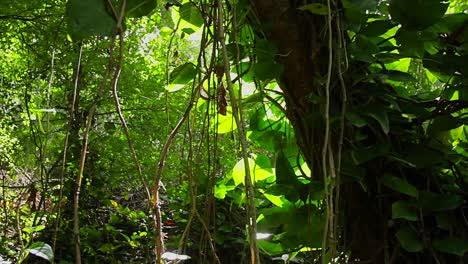 Slow-moving-shot-through-dense-rainforest-with-sun-glinting-through
