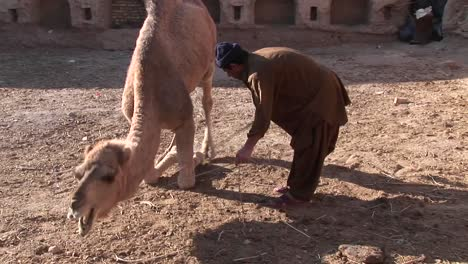 A-man-and-a-camel-in-Iran