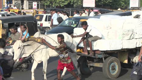 Oxen-carry-a-loaded-wagon-through-a-busy-Indian-street