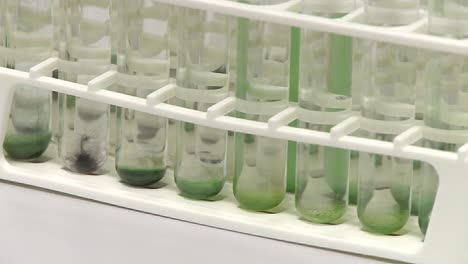Test-tube-holder-contains-a-collection-of-different-sorts-of-cyanobacteria-algae
