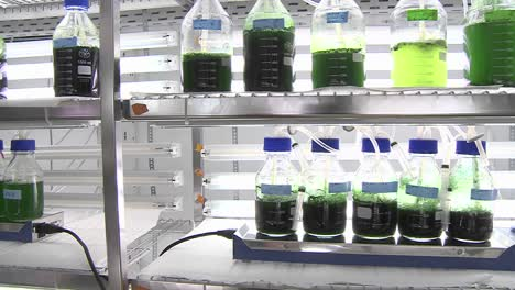 Dolly-movement-of-a-lab-scale-photobioreactor-where-we-see-flasks-containing-different-species-of-cyanobacteria