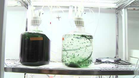 Algae-flasks-Dolly-movement-from-a-photobioreactor-we-see-different-sorts-of-cultures-of-algae-being-aired-with-carbon-dioxide