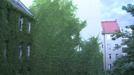 Green-wall-with-leaves-being-shaken-by-the-wind-1