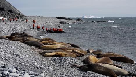 Tourists-visit-Antarctica-Elephant-Seals-Jenny-Island-on-a-zodiac-raft