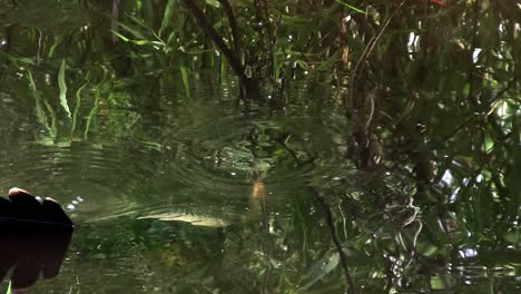 Birds-of-the-mangrove-forest-pin-the-Everglades-6