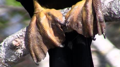 Pájaros-Del-Bosque-De-Manglares-Pin-Los-Everglades-8