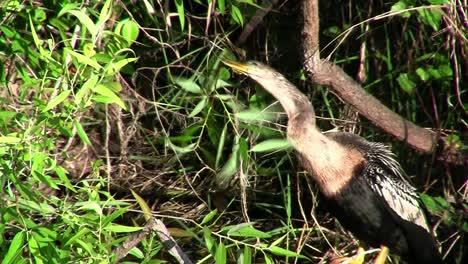Pájaros-Del-Bosque-De-Manglares-Pin-The-Everglades-9