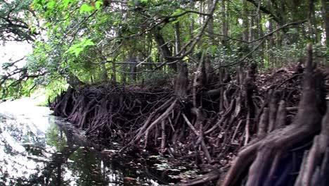POV-from-a-boat-through-the-Florida-Everglades-3