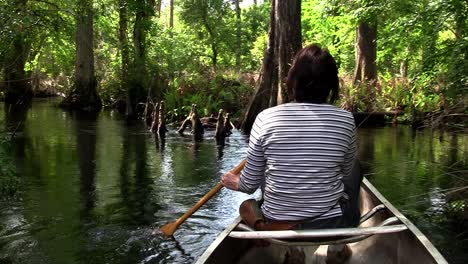 POPV-from-a-boat-traveling-through-a-mangrove-swamp-1