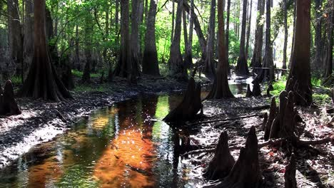 Stationary-shot-of-a-coffee-colored-swamp-in-the-Everglades
