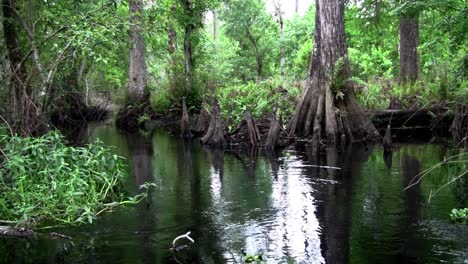 POV-shot-traveling-through-a-swamp-in-the-Everglades