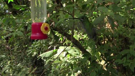 A-hummingbird-at-a-feeder