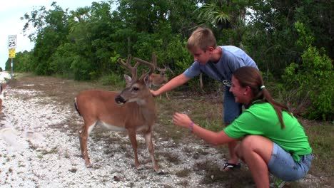 People-feed-deer-along-a-road-in-Florida-1