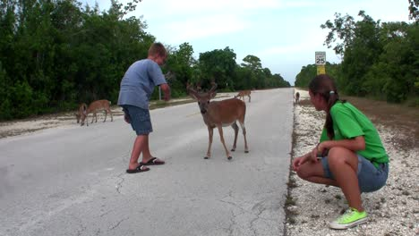 People-feed-deer-along-a-road-in-Florida-5