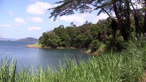 Eine-Generische-Aufnahme-Eines-Tropischen-Dschungels