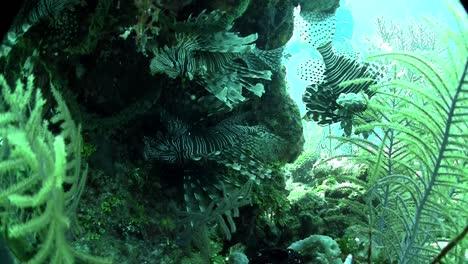 Beautiful-green-underwater-seascape