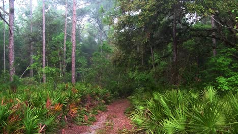 A-path-leads-into-an-Everglades-jungle-scene