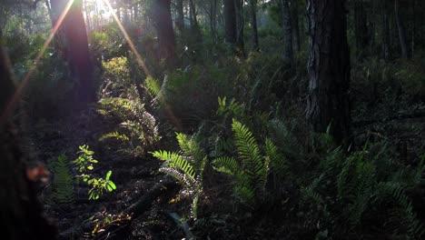Mystical-light-filters-into-a-tropical-rainforest