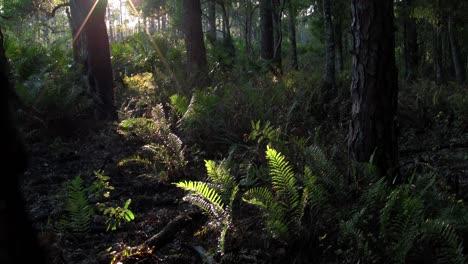 Mystical-light-filters-into-a-tropical-rainforest-1