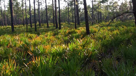 Grass-and-tress-in-the-Florida-Everglades