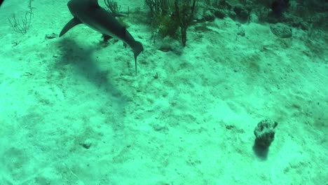 Good-footage-of-a-shark-swimming-underwater-1