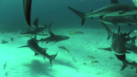 Good-footage-of-many-sharks-swimming-underwater
