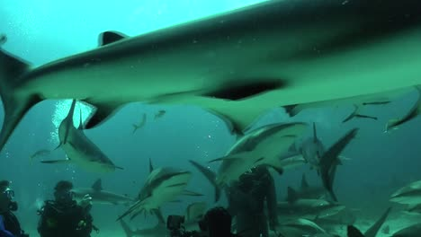 Good-footage-of-many-sharks-swimming-underwater-1