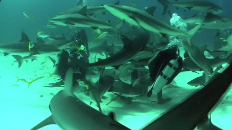 Good-footage-of-many-sharks-swimming-around-a-diver-underwater