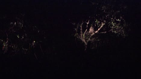 A-man-photographs-wildlife-at-night
