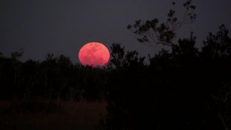 An-orange-moon-rises-behind-a-ridge