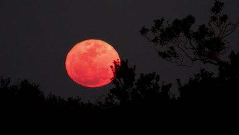 An-orange-moon-rises-behind-a-ridge-1