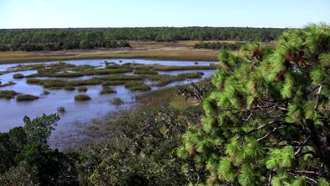 A-salt-marsh-near-St-Augustine-Florida-2