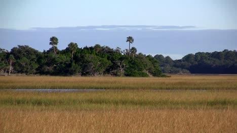 A-salt-marsh-near-St-Augustine-Florida-3